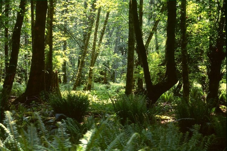 Bowen Island is filled with scenic, peaceful forests