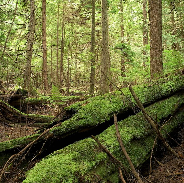 Bowen Island is filled with wonderful forest trails.